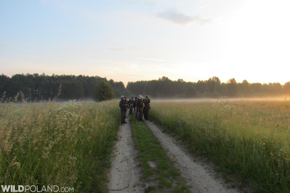 Białowieża Forest & Biebrza Marshes With Wingspan Tours, Jun 2019