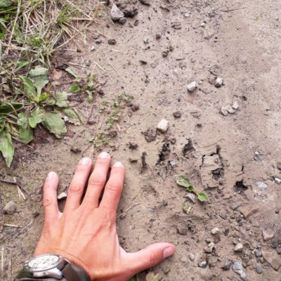Brown Bear Footprint In The Bieszczady Mts, Eastern Carpathians
