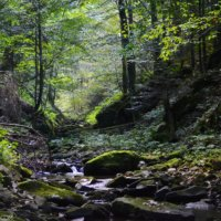 Deep In The Forest Of The Bieszczady Mountains, Eastern Carpathians