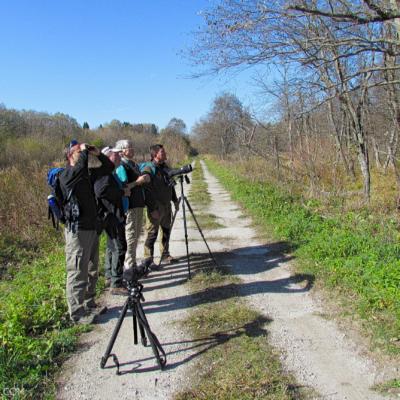 Birdwatching In The Bieszczady Mts, Eastern Carpathians