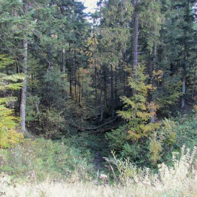Carpathian Forest, Bieszczady Mts