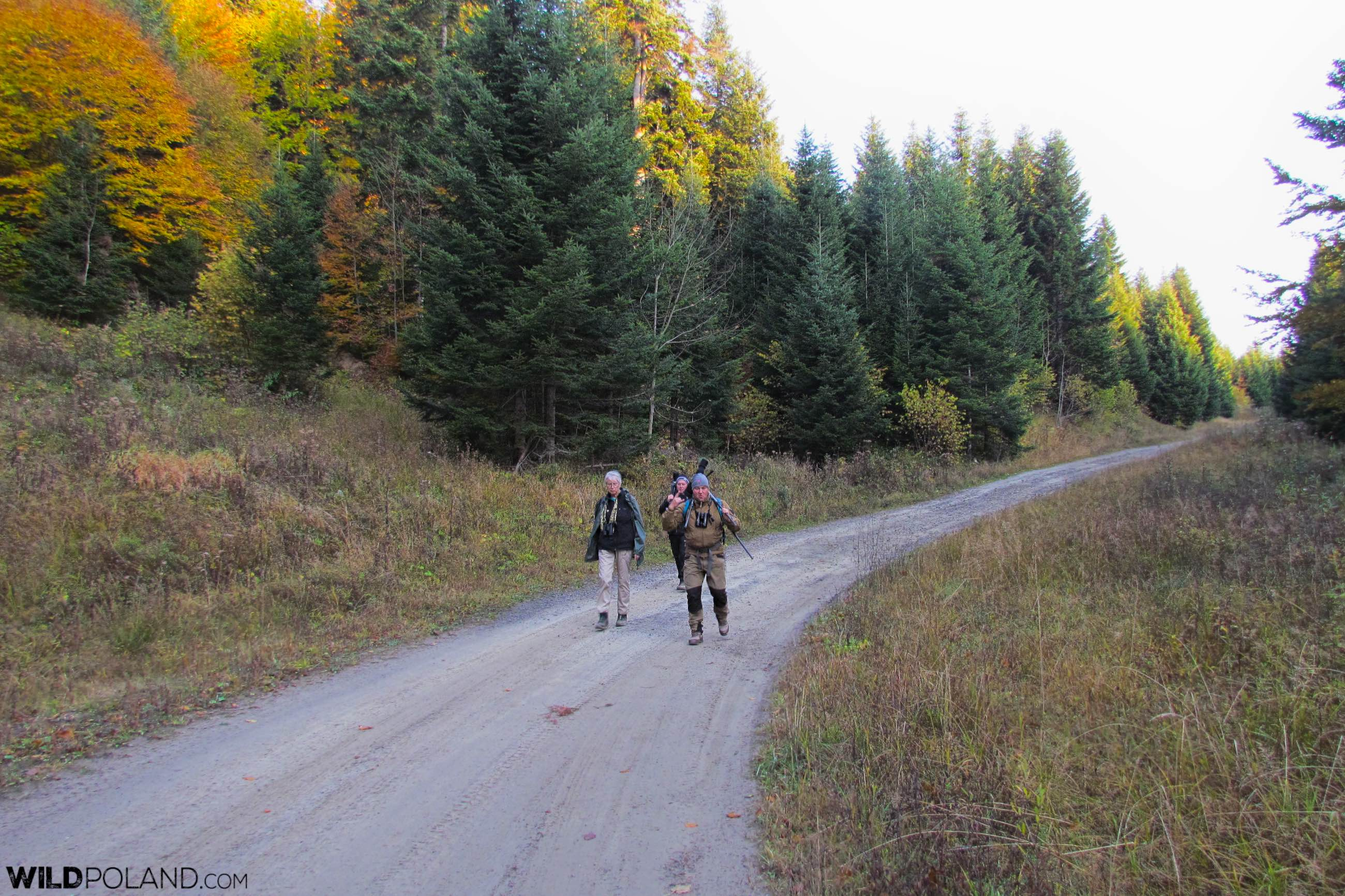 Hiking in the Carpathiands in search of large mammals