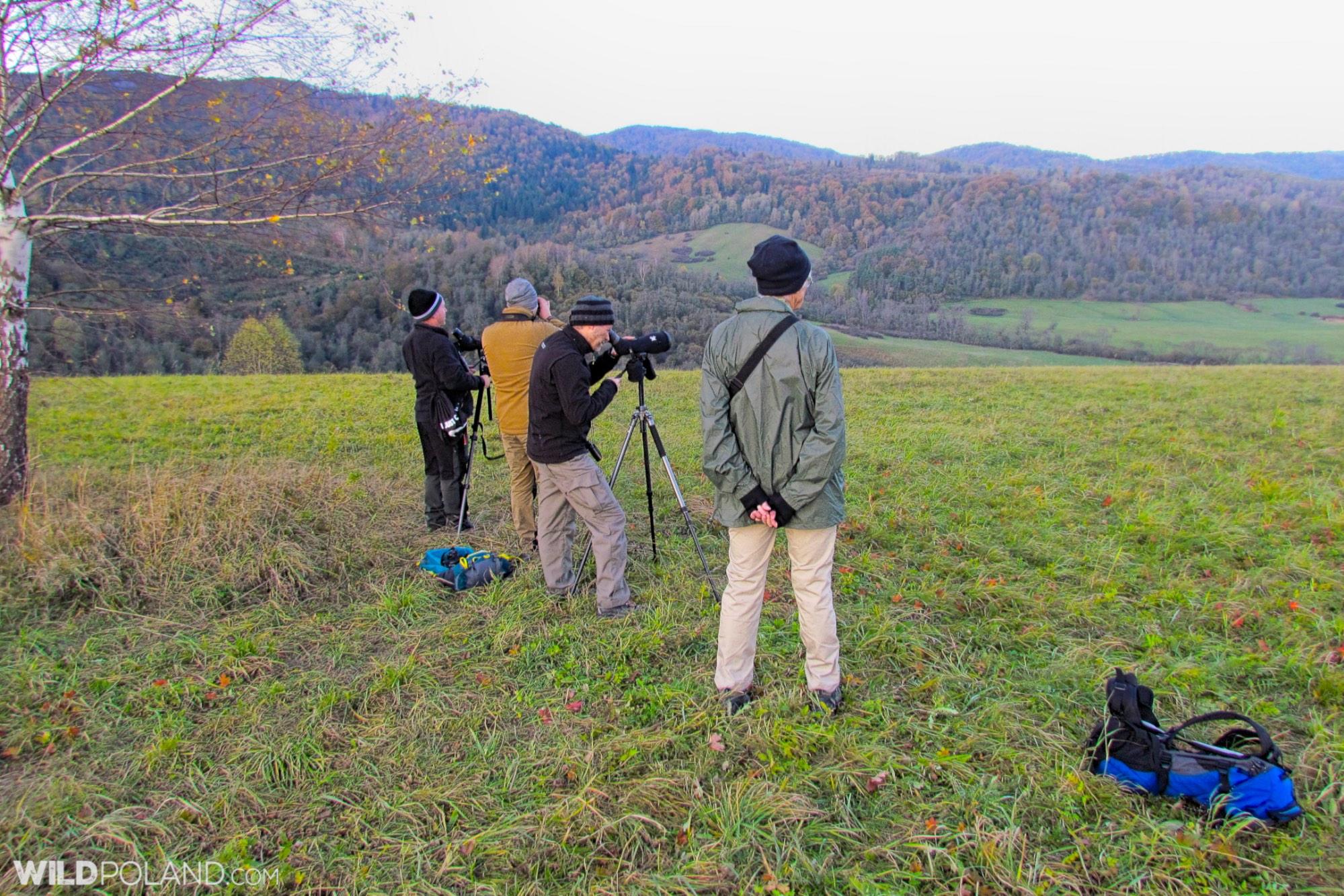 Scanning the meadows at dawn, Carpathian Mammals, Oct 2019