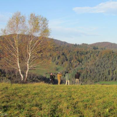 Looking For Wolves, Bears And Lynx In The Bieszczady Mts, Eastern Carpathians
