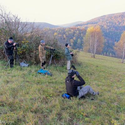 Looking For Wolves In The Bieszczady Mts