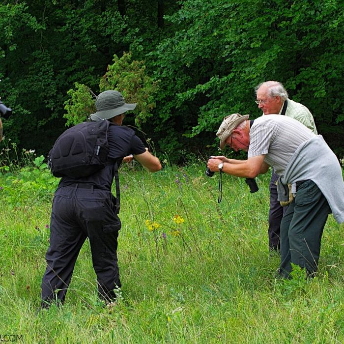Photographing Butterflies In The Białowieża Forest