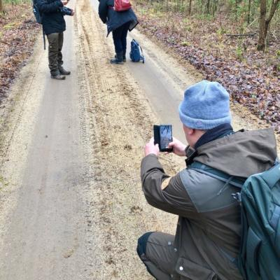 Tracking Wolves In The Białowieża Forest