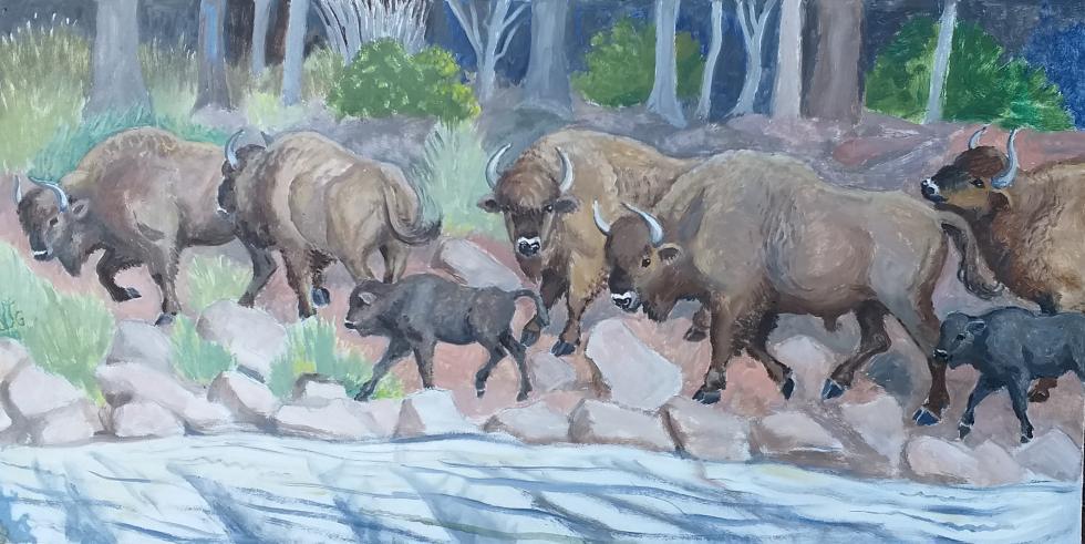 Paintings Of Bieszczady Mts By Lavinia Grant, Carpathian Wildlife Festival, Sep 2019