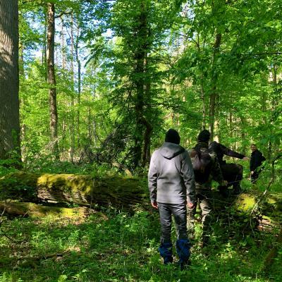 Walking In The Primeval Białowieża Forest