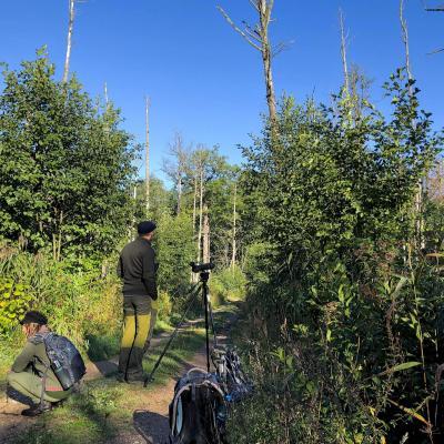 In A Bog Alder Carr Of The Białowieża Forest