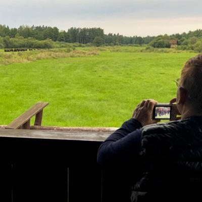 Watching Bison In The Białowieża National Park