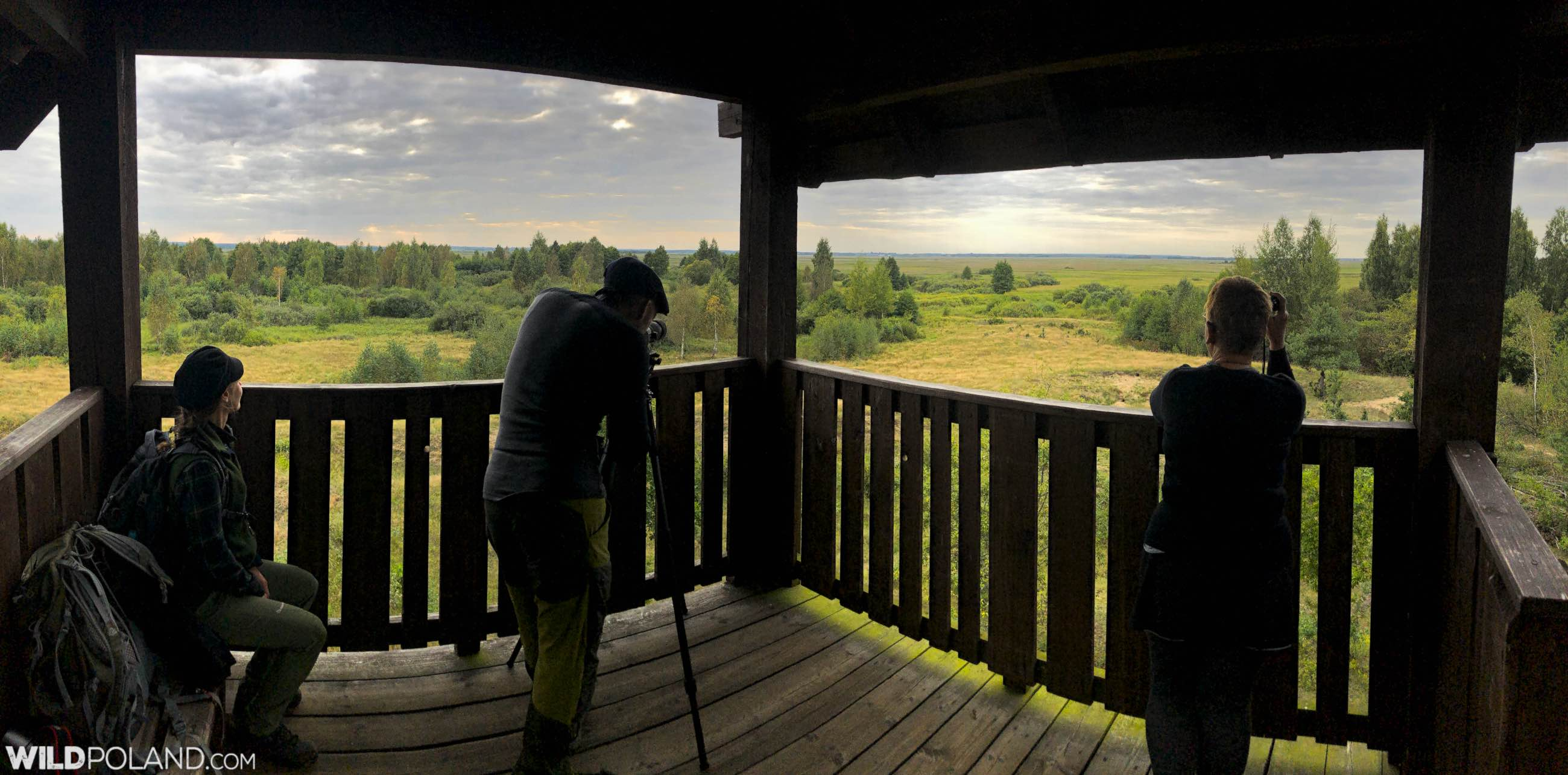 Elk (Moose) watching in the Biebrza Marshes