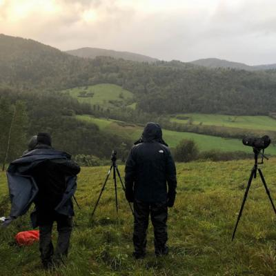 Watching Mammals In The Rain, Bieszczady Mts